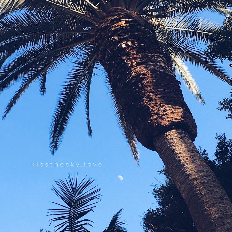 trzecia kwadra księżyca w towarzystwie palm